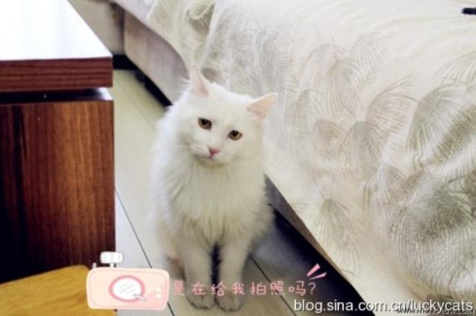 超可爱猫咪拥抱图片